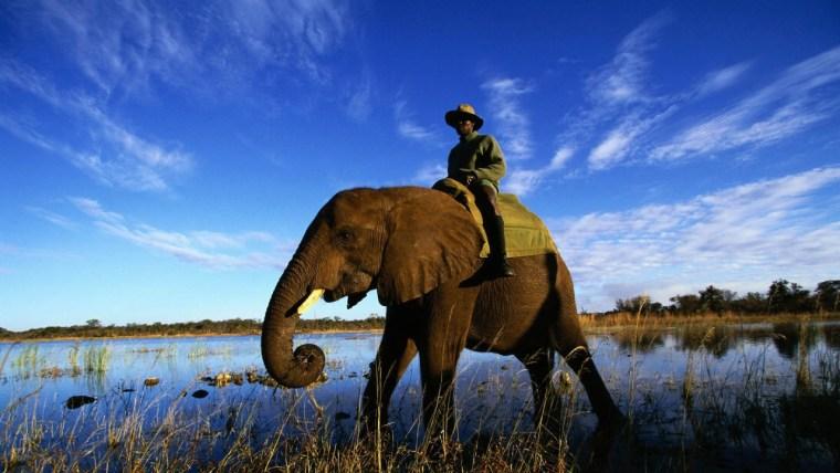 elephant_rider_grass_sky_29250_1280x720