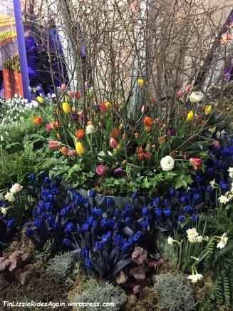 Blue Tulips