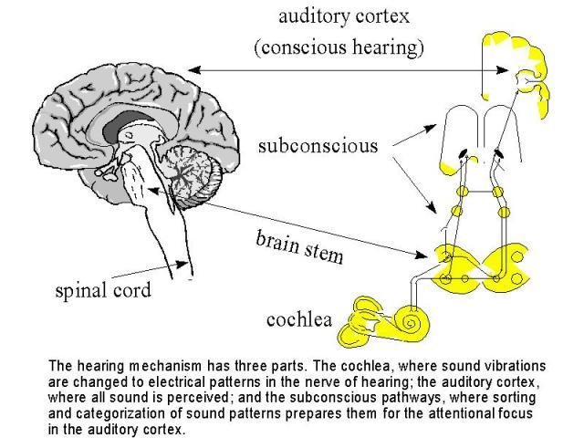 Continuous (or nonpulsatile) tinnitus refers to all other rhythms, usually a constant unrelenting noise 2