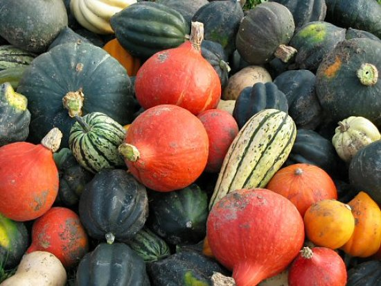 Assorted winter squash