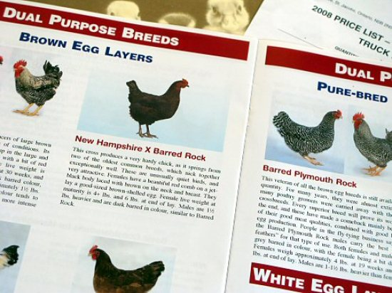 Chicken catalogs