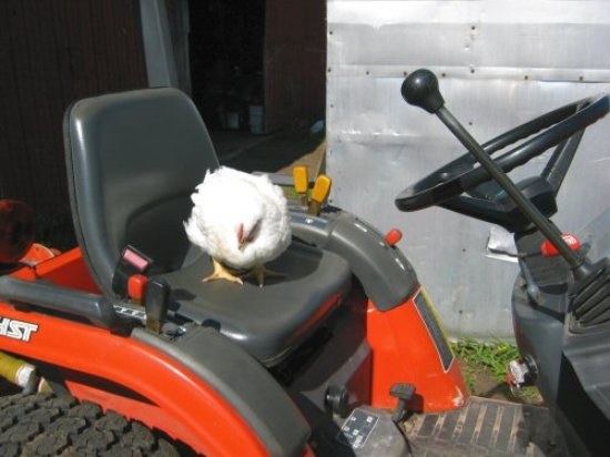 Colonel Saunders on the tractor