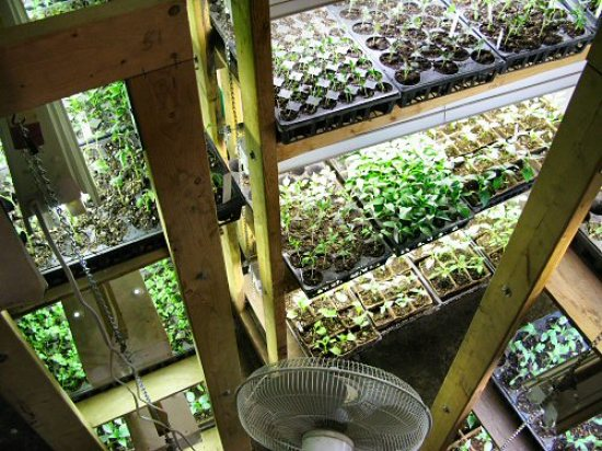 Grow racks packed with seedlings