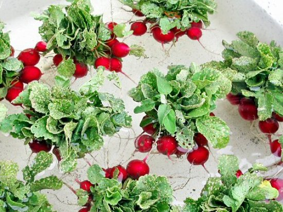 Rinsing radishes