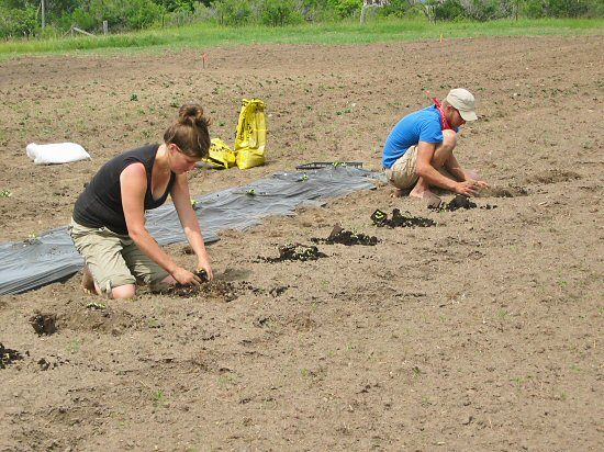 Transplanting winter squash &amp; pumpkins