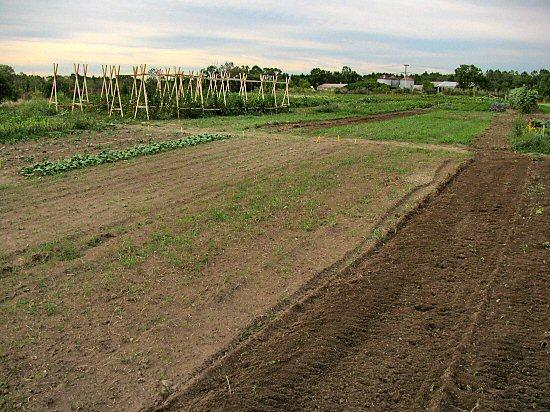 Garden in transition