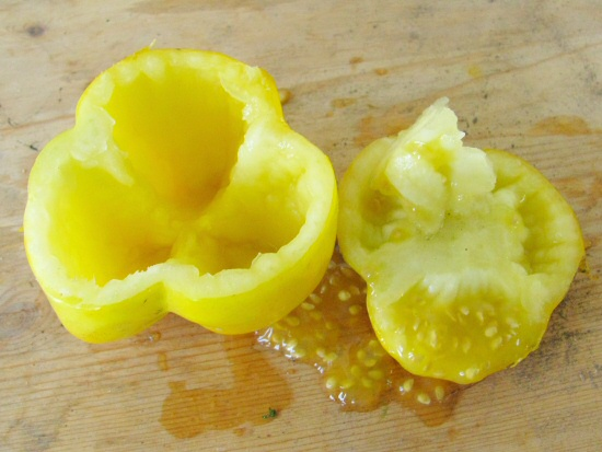 Yellow Stuffer tomato, opened