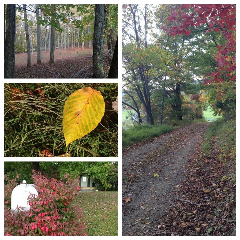 Fall walk in the Blue Ridge Mountains