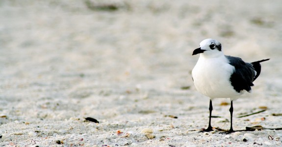 Lonely-Seagull-575x300