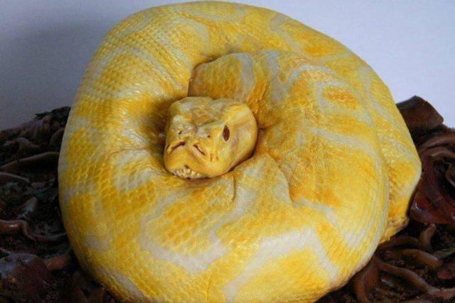 SnakeCakeforList