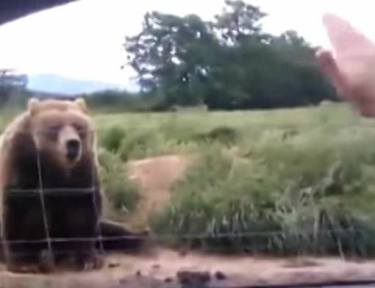 Bear waves back at waving woman in car