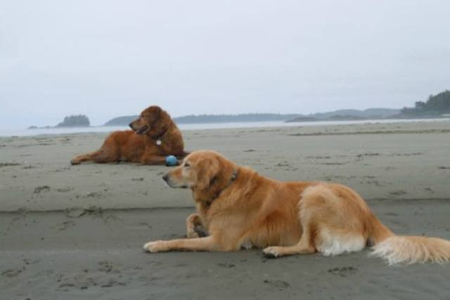 Alfie on the beach with his dog friend after rescue