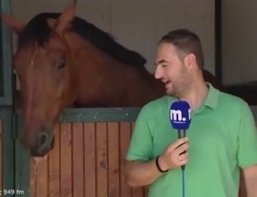 Horse messes with news reporter.