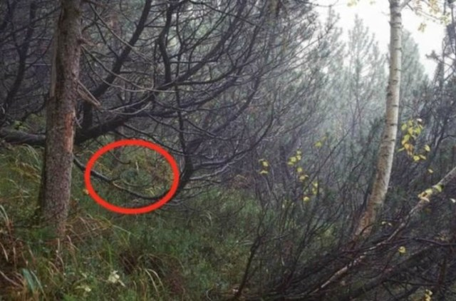 Camouflaged man circled in forest photo