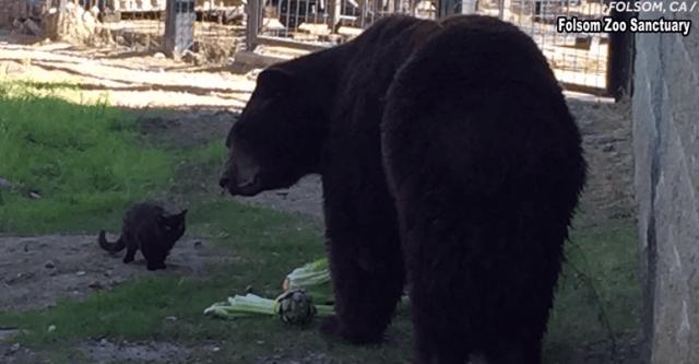 Медведь и кошка тусоваться в зоопарке.