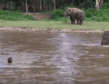 Image of elephant getting into water