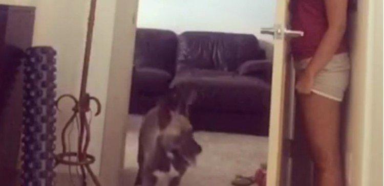 Dog looking for owner who is hiding behind door