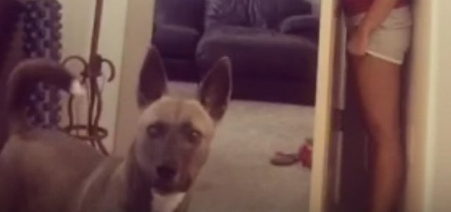 dog stares at camera while his owner hides behind door