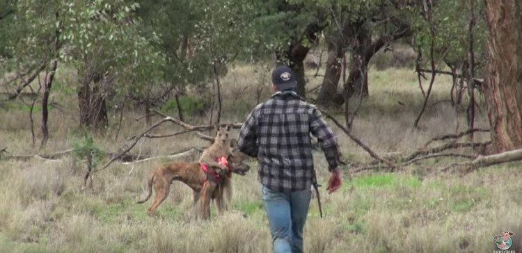 Man punches kangaroo in the face to protect his dog.