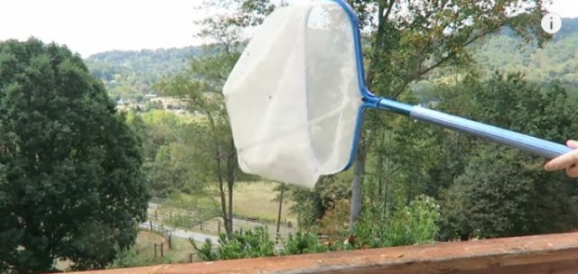 How to keep your pool net clean of leaves.