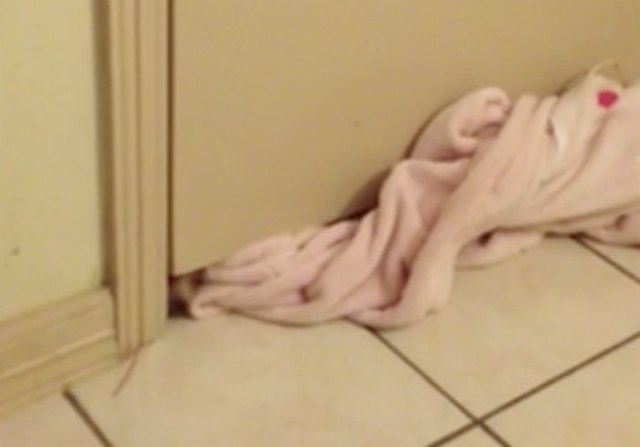 Puppy gets through door by squeezing through a crack.