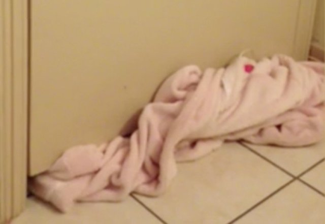 Owner laid down towel to keep dog out of room.