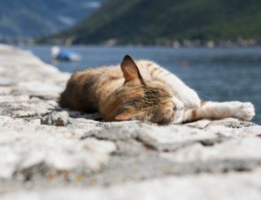cat sunbathing on a rock near the ocean