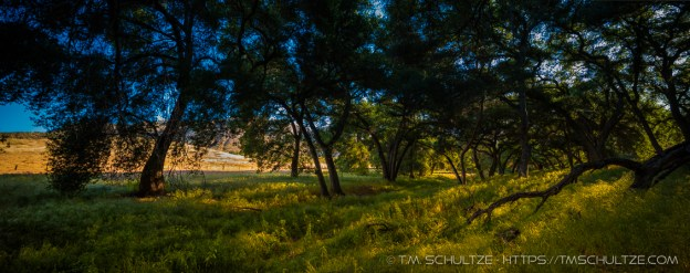 Panoramic Image Made with Alex's Rokinon Tilt-Shift Lens - No Parallax!