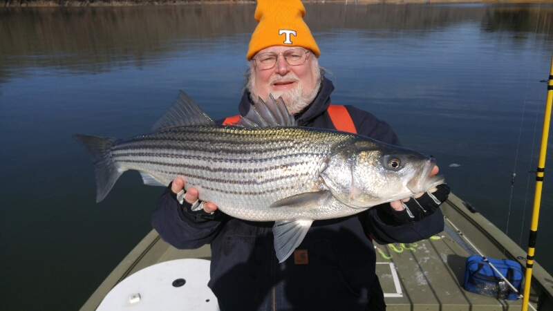 Norris lake russ 2 8 16 jay 39 s striper guide service for Norris lake fishing