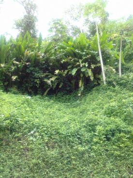 couva land for sale