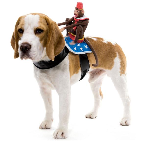 Dog-Riders-Pet-Costumes-2