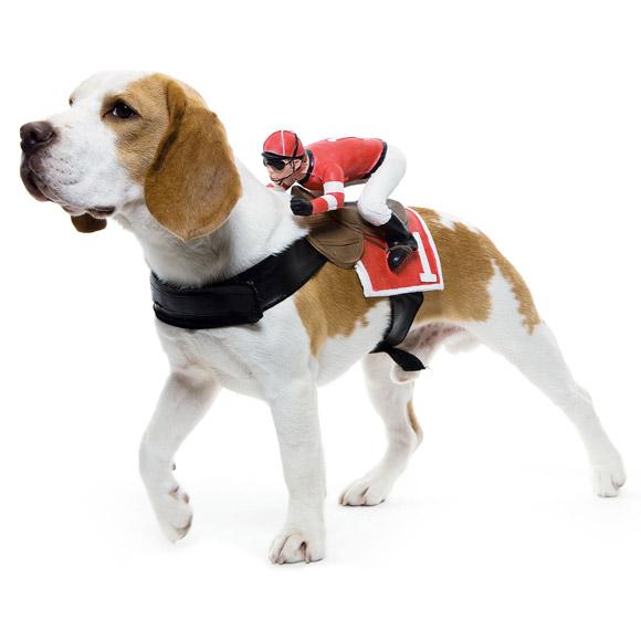 Dog-Riders-Pet-Costumes_1