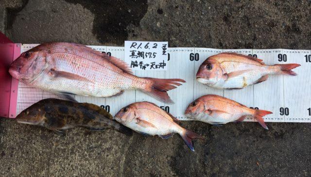 20190602 真鯛 石田 57.5cm.2