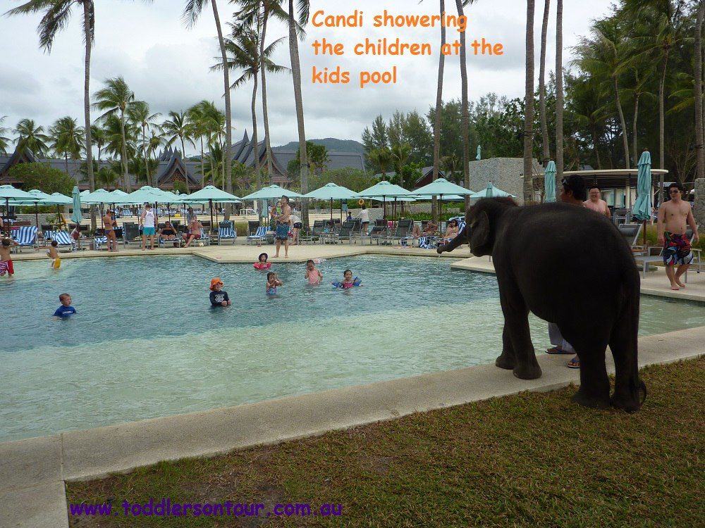 See Candi the elephant at Ourtigger Laguna Beach Resort