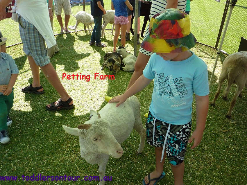 Petting Farms for festivals