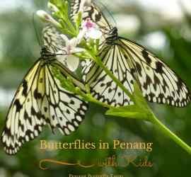 butterflies in penang