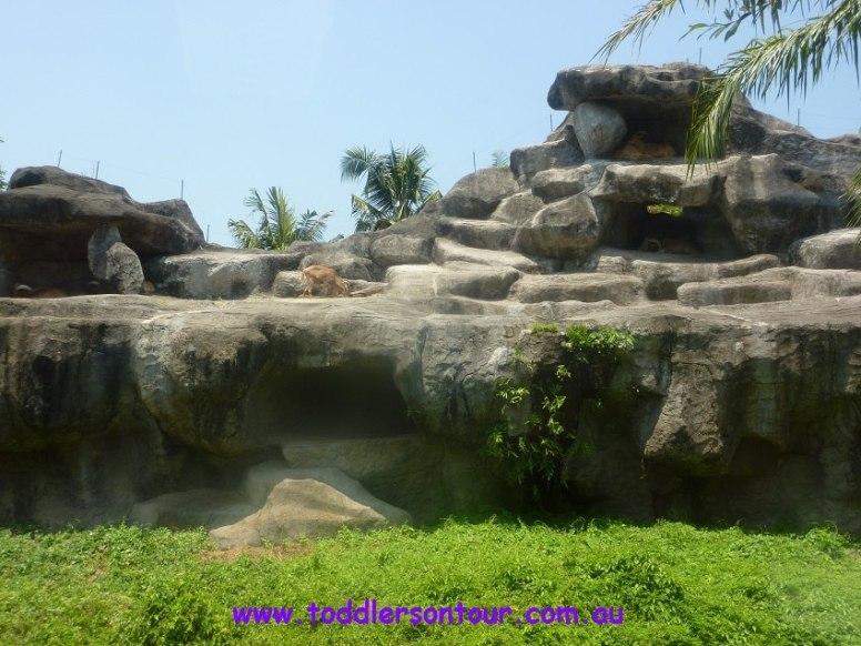 bali safari review