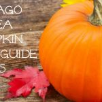 Chicago Area Pumpkin Patch Guide – 2015