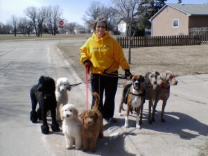 Sharon walking seven dogs on-leash