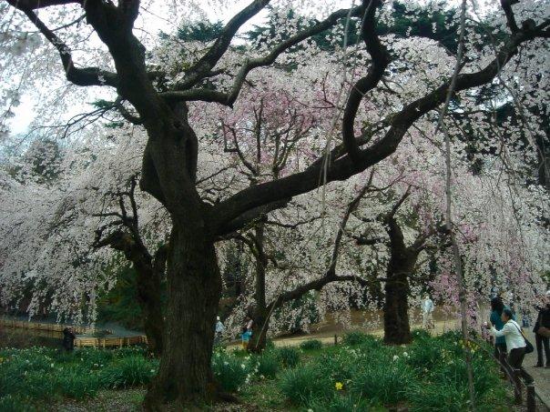Shinjuku Park Tree