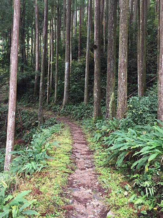 The start of the hardest part of the Kumano Kodo on Day 3 - winding uphill for almost two hours