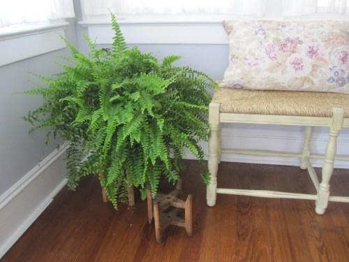 Boston fern and Ballard Designs bench
