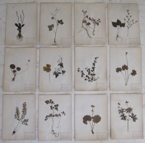 herbiers group
