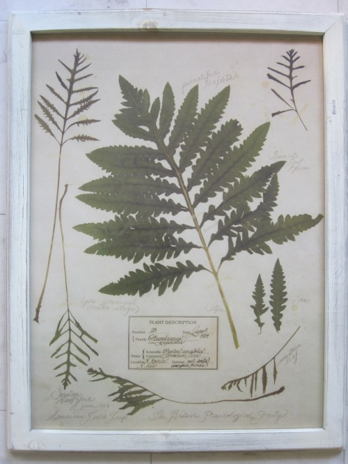 fern botanical 3