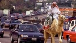 camelo transito