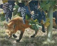foxes in vineyard