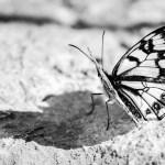 Mariposa #2