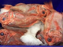 Melbourne-wholesale-fish-market-31