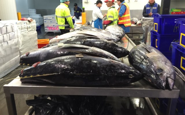 Visiting Melbourne's wholesale fish markets