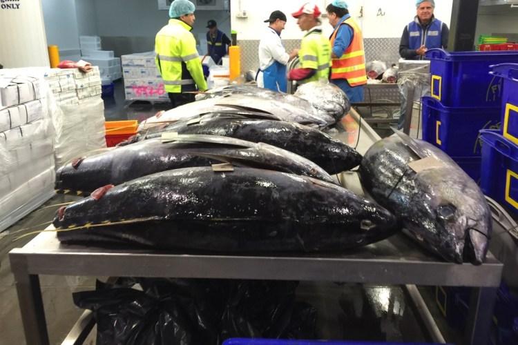 Visiting Melbourne's wholesale fish markets